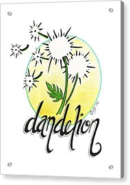 Acrylic Print featuring the drawing Dandelion by Cindy Garber Iverson