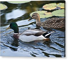 Day On The Pond Acrylic Print by Alex Garcia