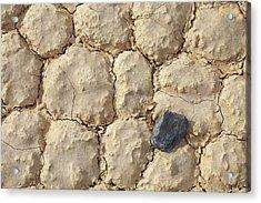 Death Valley Mud Acrylic Print