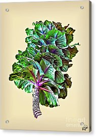 Acrylic Print featuring the photograph Decorative Cabbage by Walt Foegelle