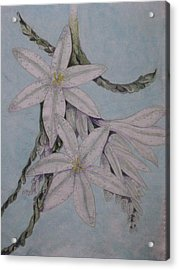 Desert Lillie Acrylic Print by David Kelly
