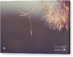 Detachement Acrylic Print by Aimelle