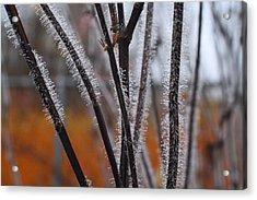Dewdrops Acrylic Print by Kathryn Meyer