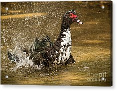 Does She See Me Yet? Wildlife Art By Kaylyn Franks Acrylic Print