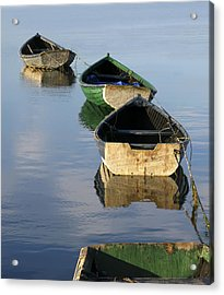 Dory Chain Acrylic Print by Carolyn Marcotte