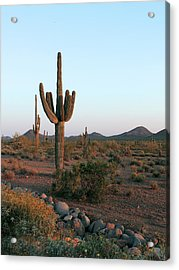 Acrylic Print featuring the photograph Dove Valley by Gordon Beck