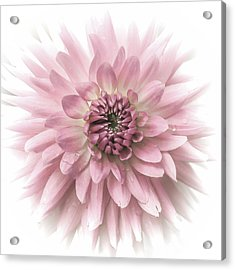 Acrylic Print featuring the photograph Dreamy Dahlia by Julie Palencia