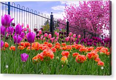Dreamy Tulip Garden Acrylic Print