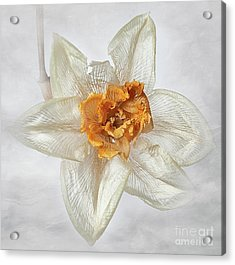 Dried Narcissus Acrylic Print