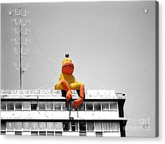 Duck View Acrylic Print by Stav Stavit Zagron
