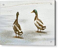 Duckwalk Acrylic Print by JAMART Photography