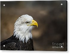 Eagle Profile Acrylic Print