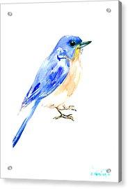 Eastern Bluebird Acrylic Print by Suren Nersisyan