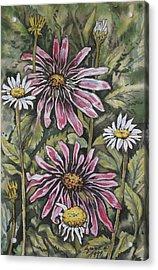 Echinachea And  Daisies Acrylic Print