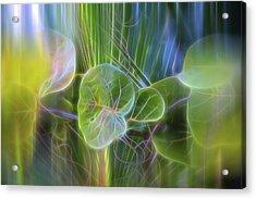 Eden Acrylic Print by Evie Carrier