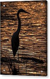 Egret Silhouette Acrylic Print by Dane Strom