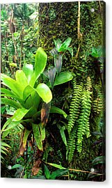 El Yunque National Forest Acrylic Print by Thomas R Fletcher