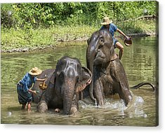 Acrylic Print featuring the photograph Elephant Bath by Wade Aiken