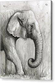Elephant Watercolor Acrylic Print by Olga Shvartsur