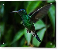 Acrylic Print featuring the photograph Emerald Glow by Blair Wainman