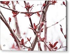 Emerge -  Acrylic Print