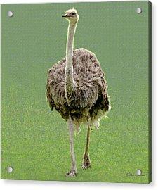 Emu Acrylic Print by Ellen Henneke