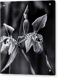 Encinitas Orchid Acrylic Print