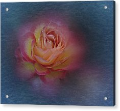Acrylic Print featuring the photograph End Of September 2016 Rose by Richard Cummings