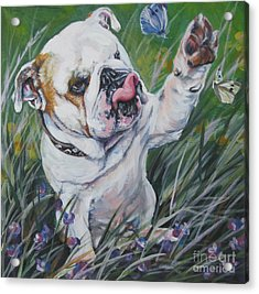 English Bulldog Acrylic Print by Lee Ann Shepard