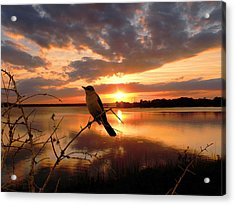 Enjoying The Sunset Acrylic Print