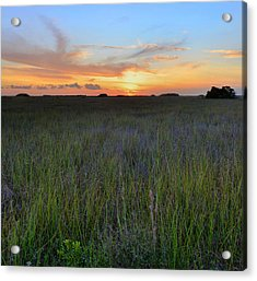 Acrylic Print featuring the photograph Everglades Sunset by Stephen  Vecchiotti