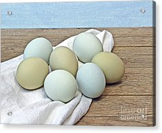 Exotic Colored Chicken Eggs Acrylic Print