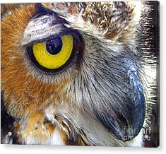 Eye Of The Owl Acrylic Print by Merton Allen