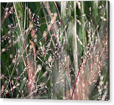 Fairies In The Grass - Acrylic Print