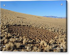 Fairy Circles In Namib Desert Acrylic Print by Francesco Tomasinelli