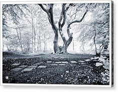 Fairy Tree Acrylic Print by Keith Elliott