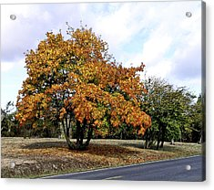 Fall Finery Acrylic Print by Wilbur Young