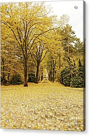 Acrylic Print featuring the photograph Carpet Of Golden Leaves by Ivy Ho