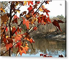Fall On The Withlacoochee River Acrylic Print