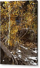 Acrylic Print featuring the painting Fall Sierra Nevada Larry Darnell by Larry Darnell