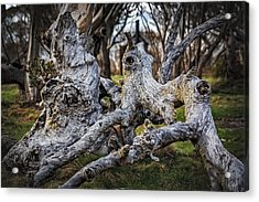 Fallen From Grace Acrylic Print by Mark Lucey