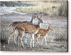 Family Outing Acrylic Print by Pravine Chester