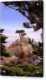 Famous Cypress Acrylic Print by Ron Regalado