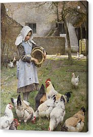 Feeding The Chickens Acrylic Print by Walter Osborne