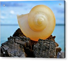 Acrylic Print featuring the photograph Fibonacci by Skip Hunt
