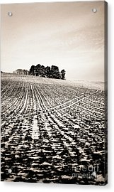 Field With Snow-covered Furrows. Auverge. France. Europe. Acrylic Print by Bernard Jaubert