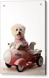 Fifi Loves Her Rocket Car  Acrylic Print by Michael Ledray