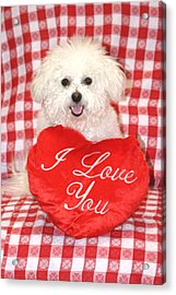 Fifi Loves You Acrylic Print by Michael Ledray