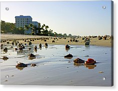 Fighting Conchs On The Beach In Naples, Fl Acrylic Print