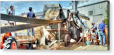Filling The Sack 3485 Acrylic Print by Jerry Sodorff